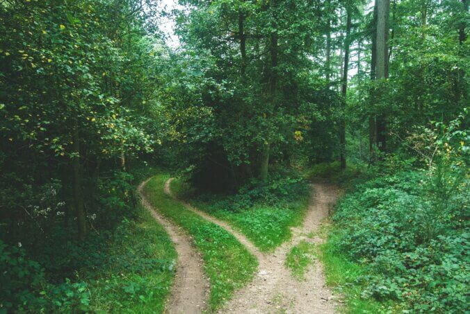 A fork in the path in a lush green forest